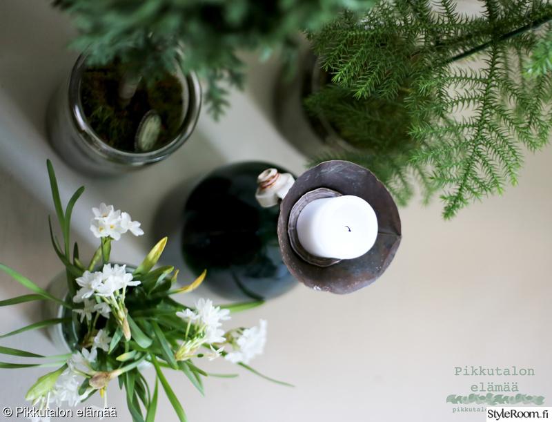 vihreä,huonekuusi,sypressi,vanhat lasitölkit