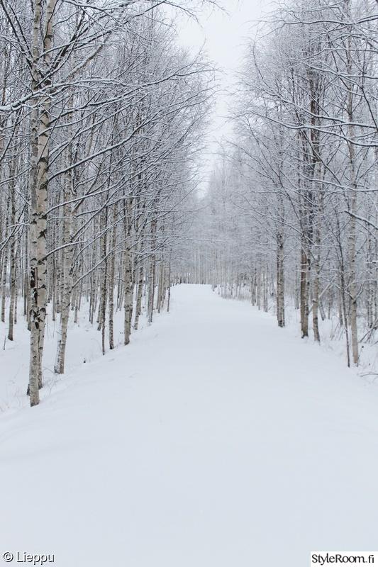 Kuva talvi  Liepun mÖkillÄ  leenakarhunen