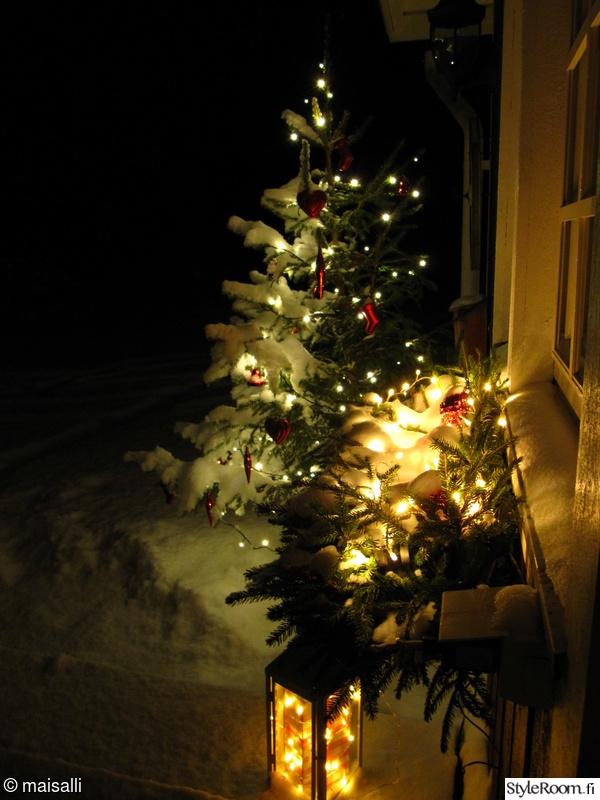 talvi,jouluvalot,lyhty,joulukuusi,lumi