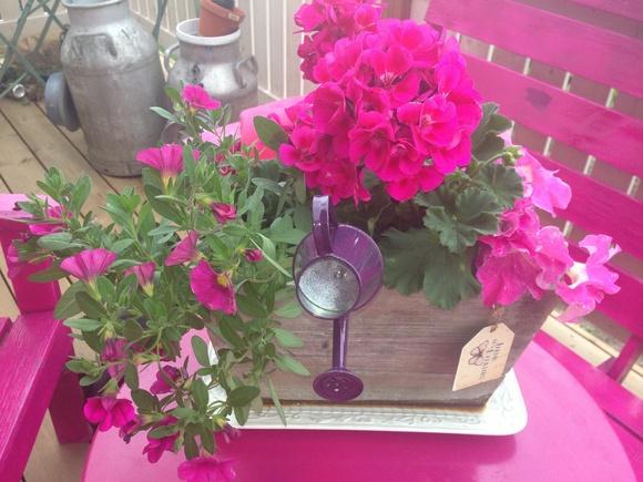 fuksia,pinkki,kastelukannu,kukkalaatikko,terassi