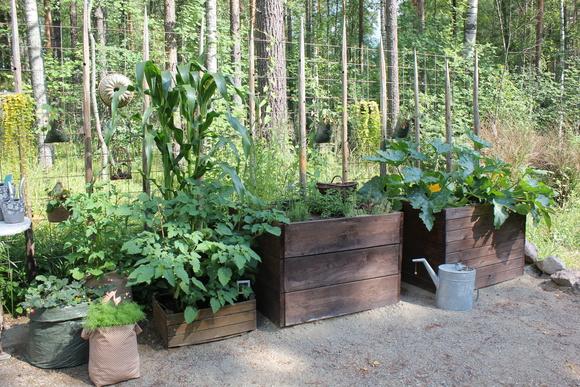 piha,laatikko,kasvilaatikko,kasvit,pihakasvit