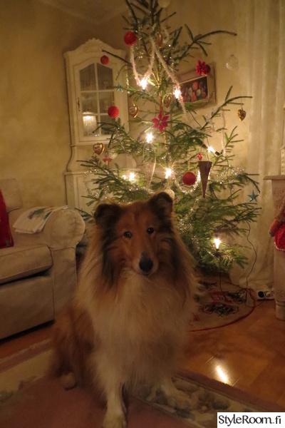 joulu,koira,joulukuusi