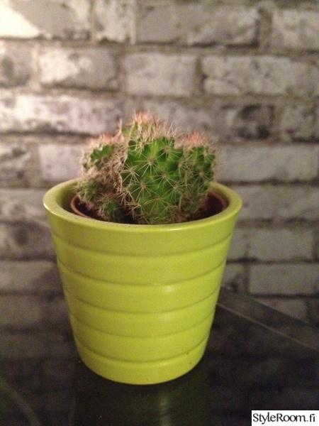 makuuhuone,kaktus,kasvit sisustuksessa,vihreä,tapettiseinä