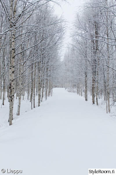 Talvi Metsä