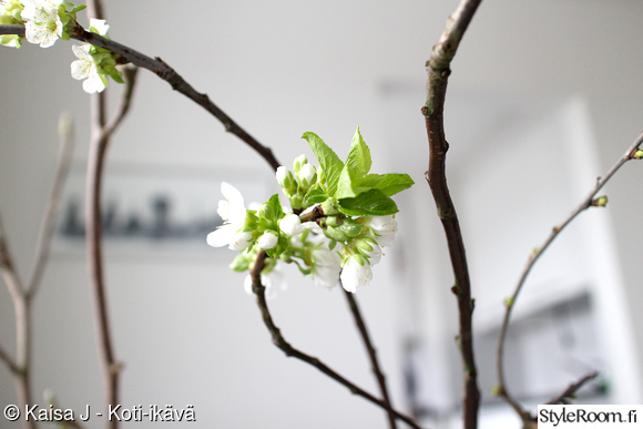 Kirsikankukka koti ja sisustusideat  StyleRoom